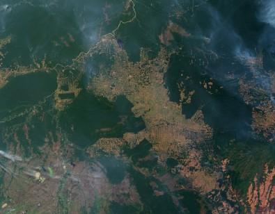 Degradação florestal no Brasil preocupa especialistas