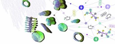 Microalgas transformadas