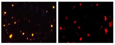 Nanotermômetro luminescente é desenvolvido por pesquisadores europeus
