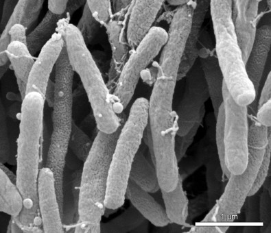 Agricultural pests produce nonstick substance as an adaptation strategy