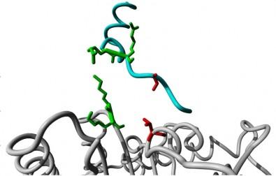 Un estudio ayuda a entender el funcionamiento del 'interruptor' de las proteínas