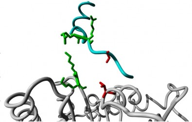 Study helps to understand how the protein 'on/off switch' works