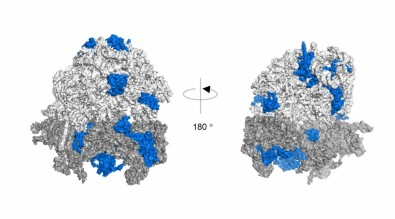 New mechanism of cellular response to oxidative stress discovered
