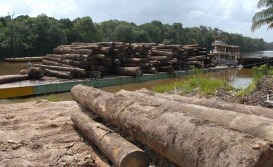 Electronic nose identifies wood species and can help to combat illegal logging