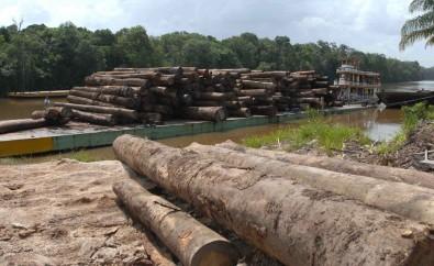 Una nariz electrónica identifica maderas y puede combatir la extracción ilegal