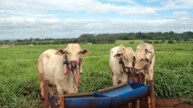 Científicos analizan las emanaciones de metano de los bovinos