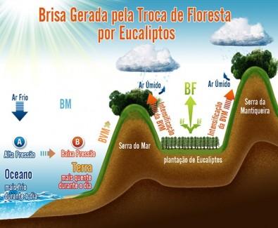 Plantio de eucalipto aumenta chuva em regiões altas das Serras do Mar e Mantiqueira