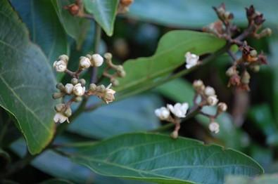 Composto natural é testado contra leishmaniose e doença de Chagas