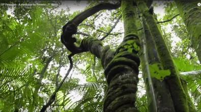 Medicina na floresta é tema do SP Pesquisa