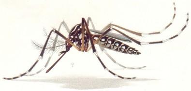 Nova evidência pode influenciar escolha de vacina contra a dengue