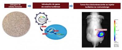 Novos alvos para o tratamento de mieloma múltiplo