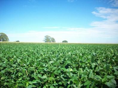 Ciência pode ajudar a reduzir impacto de fertilizantes nitrogenados no meio ambiente