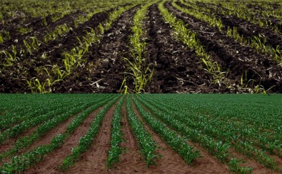 Measures to reconcile food security, biofuel production and sustainability