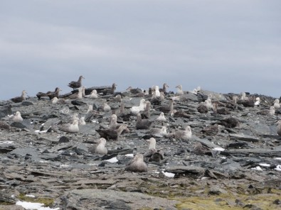 Antarctic bird colonies endangered by agrochemicals