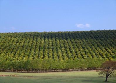 Investimentos em capital humano e em pesquisa aumentam a produtividade da agricultura