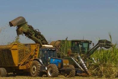 Produção da agricultura paulista aumenta em mais de 90% nas últimas duas décadas