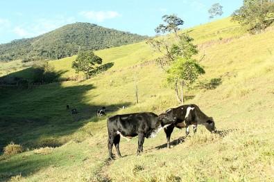 Mudanças no uso da terra afetam a biodiversidade e o solo, afirma estudo
