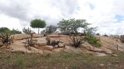 Pesquisadores monitoram emissões de gases do efeito estufa na Caatinga