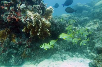 Biodiversidade marinha brasileira ganha série com 10 livros