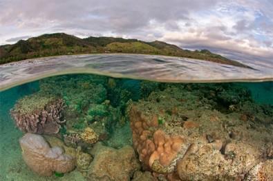 Biodiversidade marinha aumenta em áreas protegidas