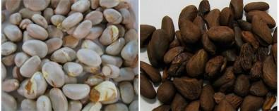 Investigadores obtienen aroma a chocolate de semillas del árbol de jack