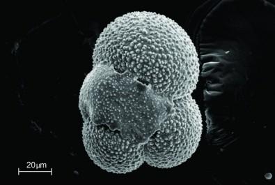 Estudo de conchas mostrou como o oceano reagiu ao aquecimento do planeta