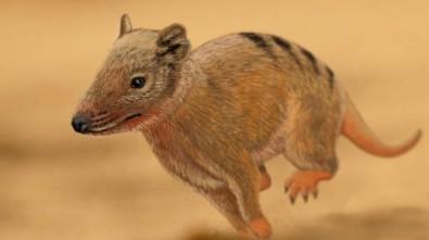 Mamífero saltava há mais de 140 milhões de anos