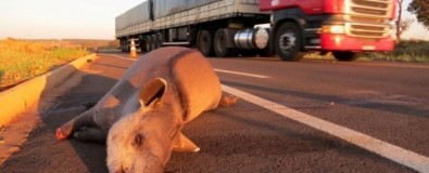 Startup develops animal detection system to prevent roadkill