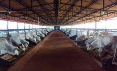 Nutrition is key to increasing productivity in intensive breeding