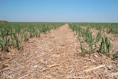 Novo método de manejo ajuda a mitigar a emissão de gases estufa no cultivo da cana