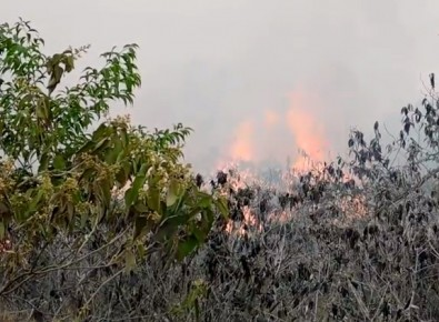 La veda de uso del fuego provocó una enorme pérdida de biodiversidad en el Cerrado