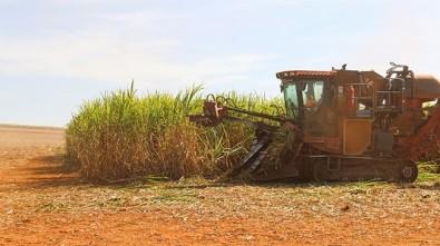 El etanol de Brasil puede reemplazar casi un 14% del petróleo consumido en el mundo
