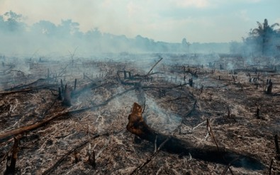 El desmonte puede intensificar el proceso de calentamiento global