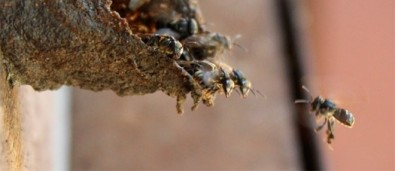 Bacteria and fungi play key roles in social insect colonies