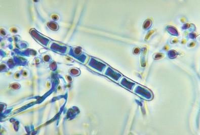 Pós-doutorado em Genética Molecular com Bolsa da FAPESP
