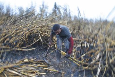 Fronteiras do etanol de cana-de-açúcar