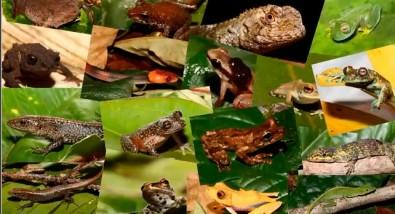 Expedições à Amazônia revelam novas espécies de sapos, lagartos, aves e plantas
