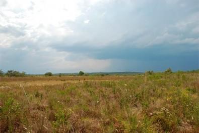 La germinación en la sabana brasileña es única entre los biomas similares en el mundo