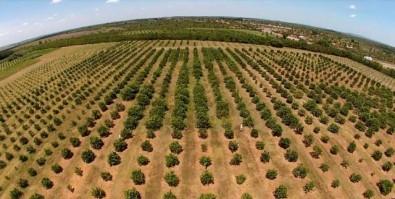 Estudo aponta caminho para expansão e intensificação da agropecuária brasileira