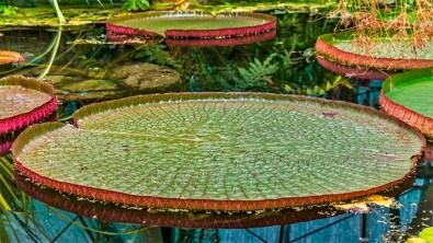 Conservar a Amazônia é questão ambiental, social e econômica