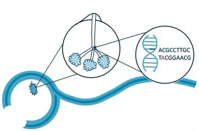 Mutações não hereditárias são principal causa de câncer de mama em mulheres jovens