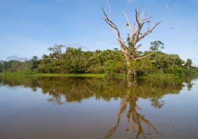 La diversidad de árboles en los humedales de la Amazonia triplica las previsiones