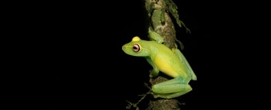 El cambio climático podría extinguir al 10% de las especies anfibias del Bosque Atlántico