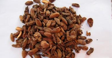 Cappuccino com semente de jaca tem aroma de chocolate