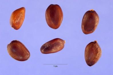 Una proteína de una planta brasileña inhibe la progresión del cáncer de mama triple negativo