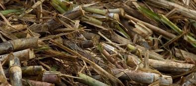 Pesquisas buscam melhores formas de usar a biomassa