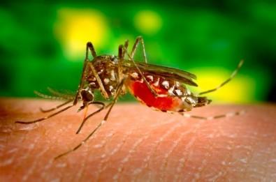 Descubierto un biomarcador que detecta el dengue hemorrágico