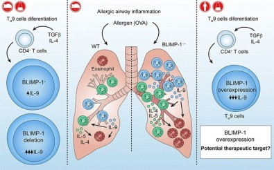 Descubren el camino hacia la interrupción del desarrollo del asma alérgica