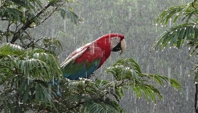 La biodiversidad es estratégica para el desarrollo de Brasil