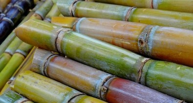 América Latina e África podem se beneficiar da produção de bioenergia da cana